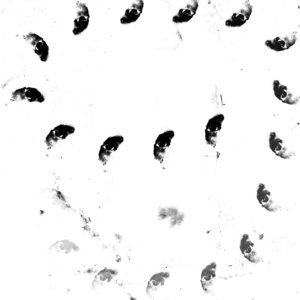 Monolithe Noir - Moïra Lp [KTW011]